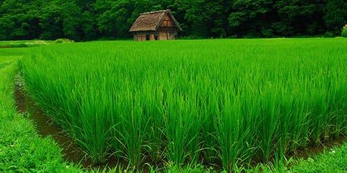 высокая трава во сне