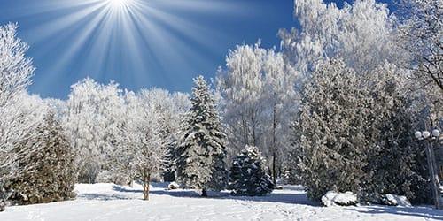 зима не в сезон во сне