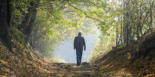 к чему снится идти по лесу