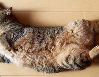 Кошка умерла