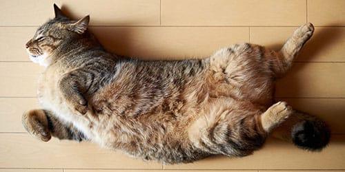 видеть во сне что кошка умерла