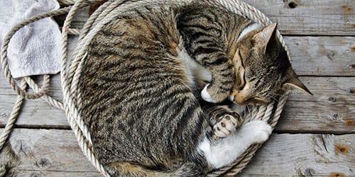 к чему снится что кошка умерла