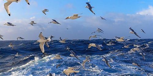видеть во сне океан волны