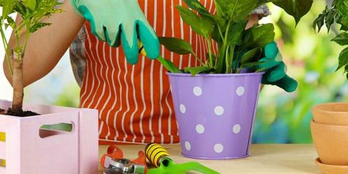 пересаживать растение