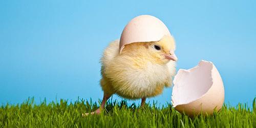 к чему снится куриное яйцо с зародышем