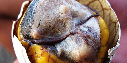 видеть во сне яйцо с зародышем
