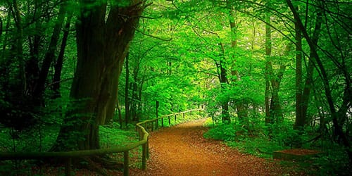 видеть во сне зеленый лес