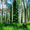 к чему снится зеленый лес
