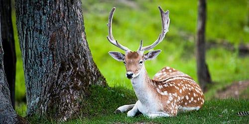 животное в лесу