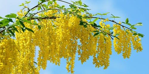 желтый цвет
