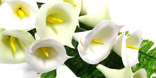 к чему снится цветок калла