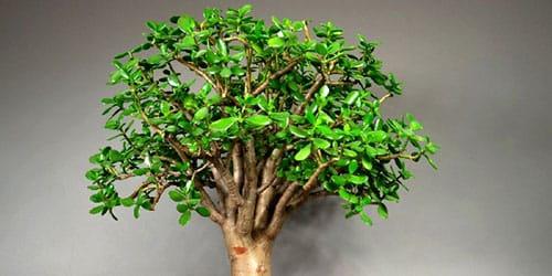 к чему снится денежное дерево