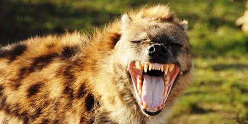 агрессивное животное
