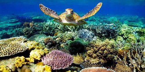 видеть во сне кораллы