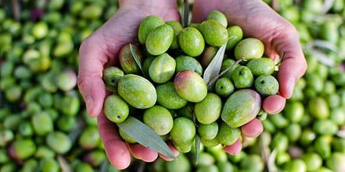 к чему снятся оливки