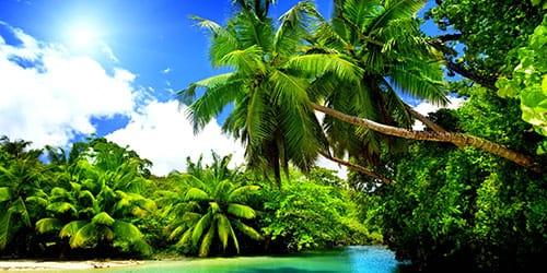 видеть во сне пальму