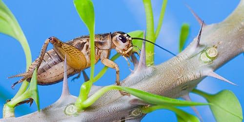 насекомое на ветке
