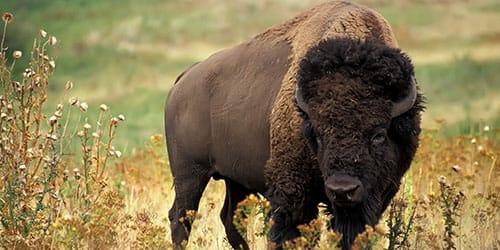 огромное животное