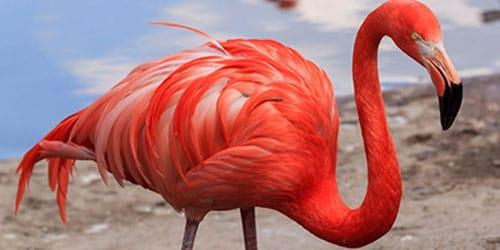 видеть во сне розовый фламинго