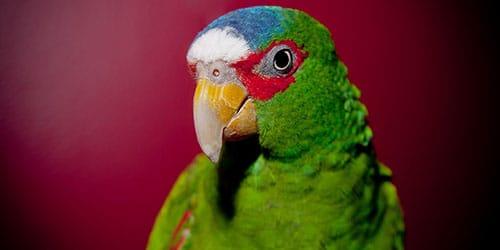 яркая птица