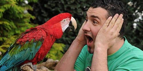 к чему снится говорящий попугай