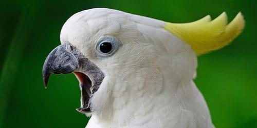 видеть говорящего попугая во сне