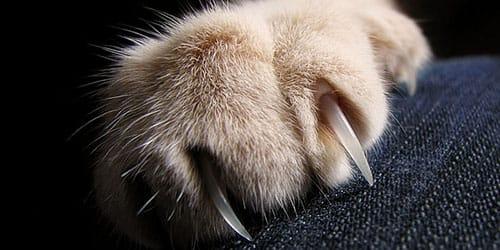 видеть во сне когти кошки