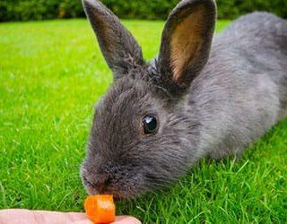 Кормить кроликов