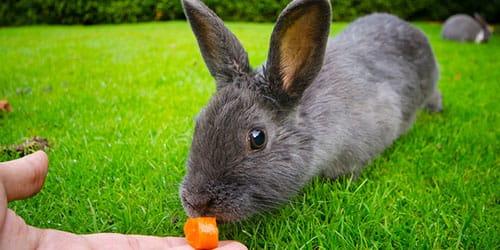 кормить кроликов во сне