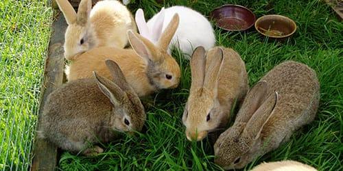 к чему снится кормить кроликов травой