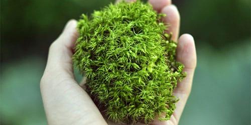 растительный материал
