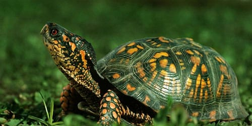видеть во сне панцирь черепахи