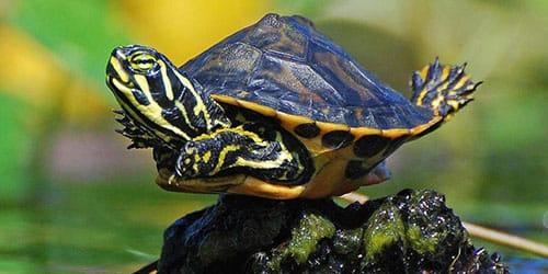 к чему снится панцирь черепахи