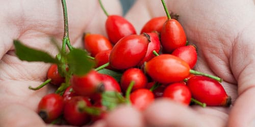 к чему снится собирать ягоды шиповника