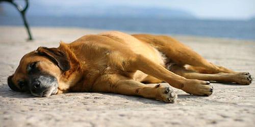 Сон видеть живой умершую собаку живой thumbnail