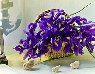 Цветы ирисы