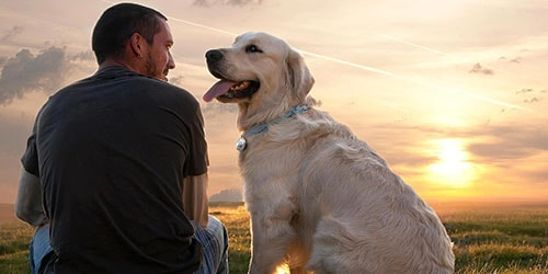 к чему снится хозяин собаки
