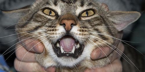 видеть во сне издевательство над животными