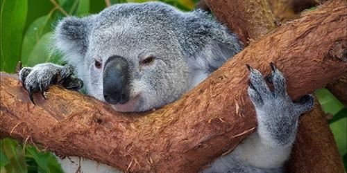 животное на дереве