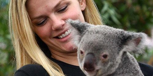 к чему снится держать на руках коалу