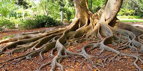 видеть во сне большие корни деревьев