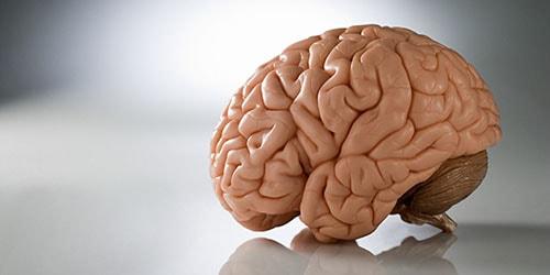 видеть во сне собственный мозг