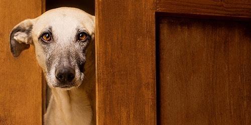 к чему снится прогонять собаку за дверь