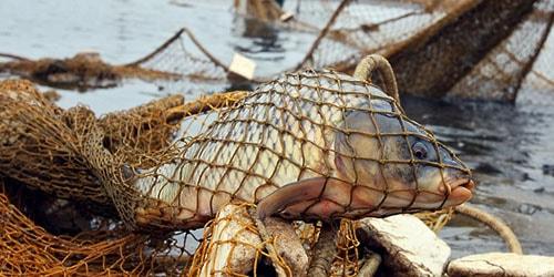 Сонник рыболовная сеть к чему снится рыболовная сеть во сне