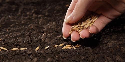сажать семена