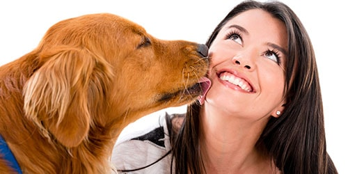 к чему снится что собака лижет лицо