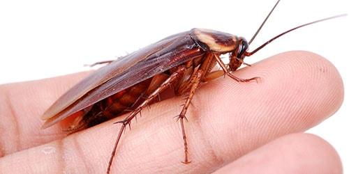 видеть во сне тараканов на теле