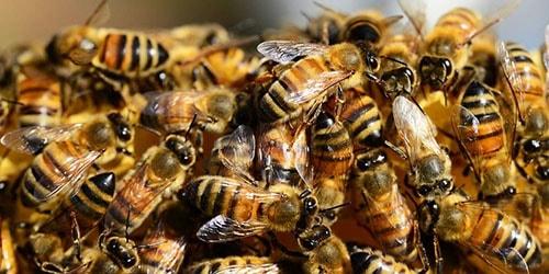 видеть во сне улей с пчелами