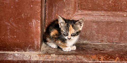 выгонять из дома кота во сне
