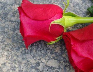 Приснились цветы на могиле